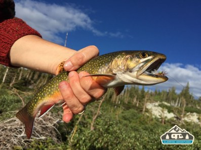 Nice Brook Trout caught at Libby Lake, WY.