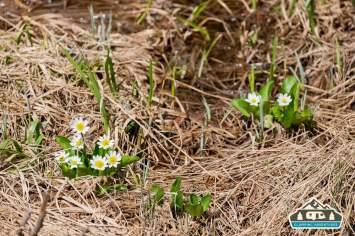 Tiny Flowers. Grand Lake, CO.