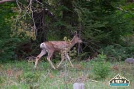 Sweet, little, deer in RMNP.