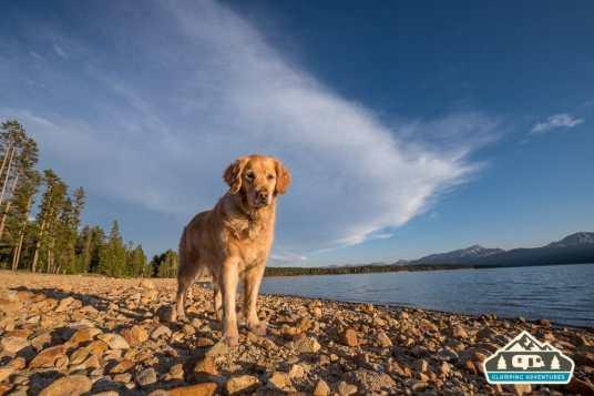 Daisy enjoying the beach. Turquoise Lake, Leadville, CO.