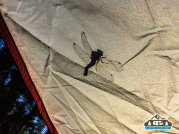 Friendly dragon fly. Baby Doe C.G. Leadville, CO.