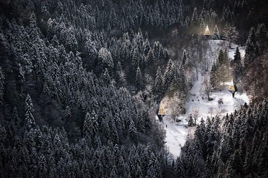 pine tree shaped houses