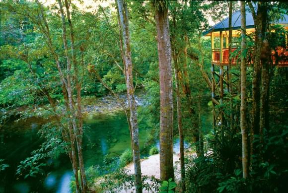 Silky Oaks Jungle perch ext