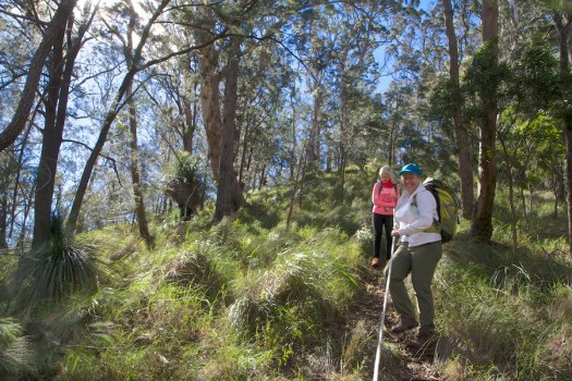 Spicers Canopy 1