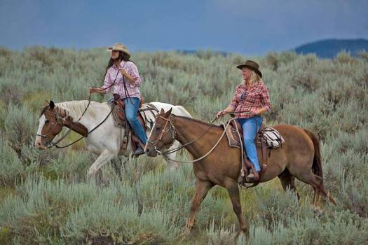paws up cowgirl roundup