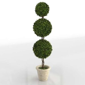 Preserved Boxwood Triple Topiary Terrian