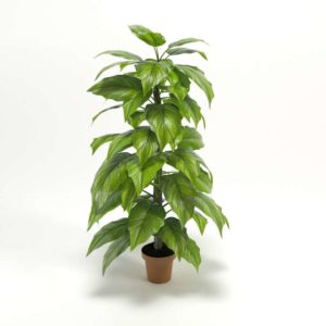 Leaf Philodendron Tree Wayfair
