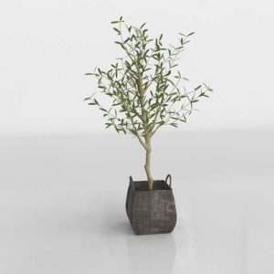 Crateandbarrel Faux Olive Tree