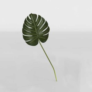 Anthropologie Decorative Foliage