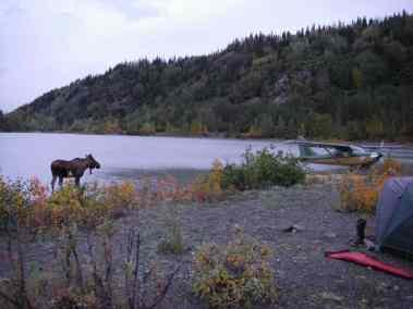 Moose Hunt 08 015