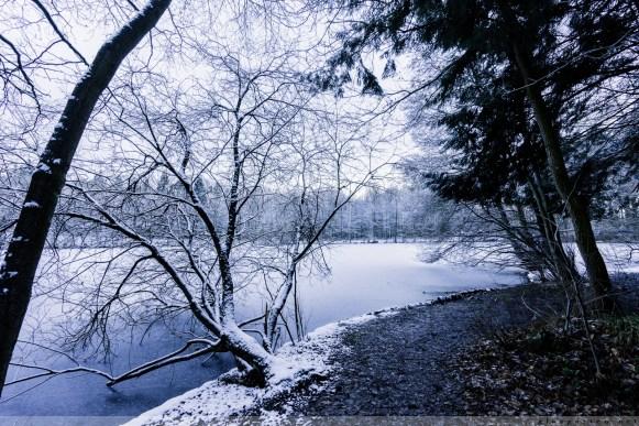 Foersterteiche_im_Winter_00008