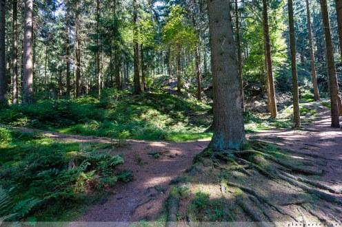 Silberbachtal, Horn, Bad Meinberg, Teutoburger Wald, Lippe, NRW, wandern, geocachen, geocaching, natur, Fotografie, Wasser