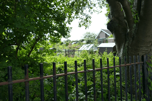 A photo of an allotmnet from ouside the perimeter fence