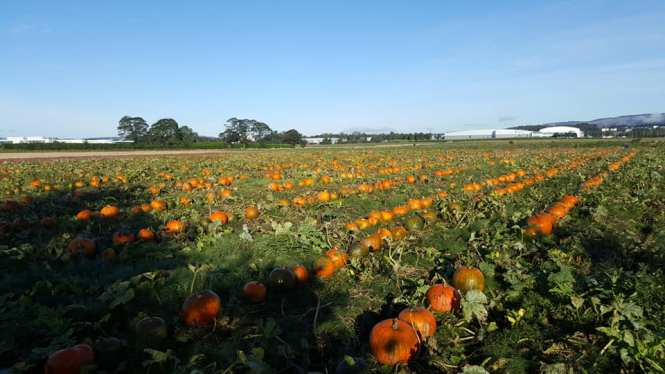 east yonderton farm