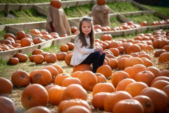 m&ds pumpkin