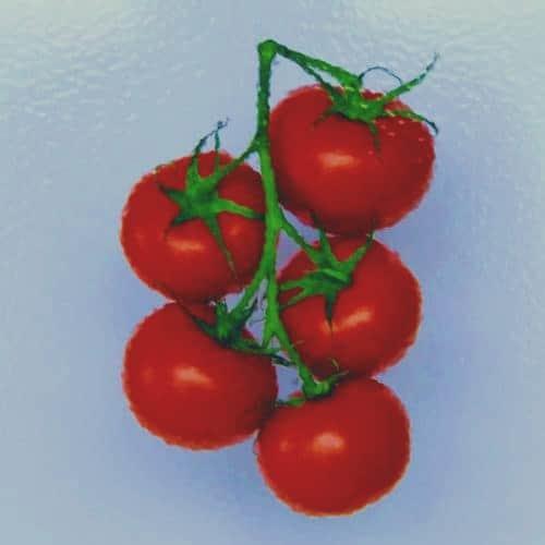 Tomaten Vetrasol Zero