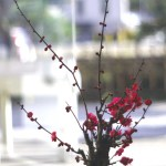 "<span class=""title"">春近し!</span>"
