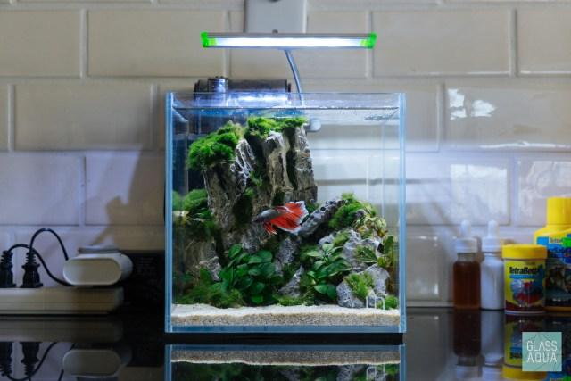 Betta Nano Planted Tank