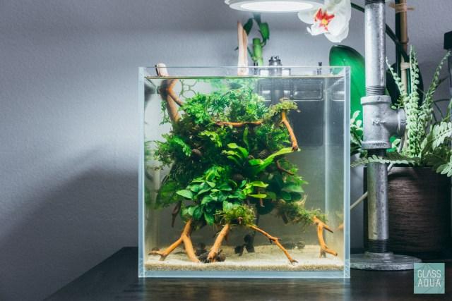 A 2 Gallon Planted Nano Tank For A Friend Glass Aqua