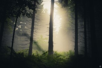 mist-in-the-woods_006_online