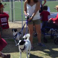 GPNC board member Sandy Garcia with her dogs Oreo & Odie