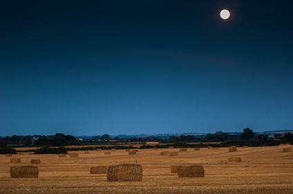 Harvest 2016 Photo: by Terry Brignall