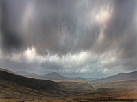 Peat Bogs-Sally Gap
