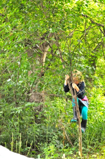 Muriel shakes one of our small mulberry bushes