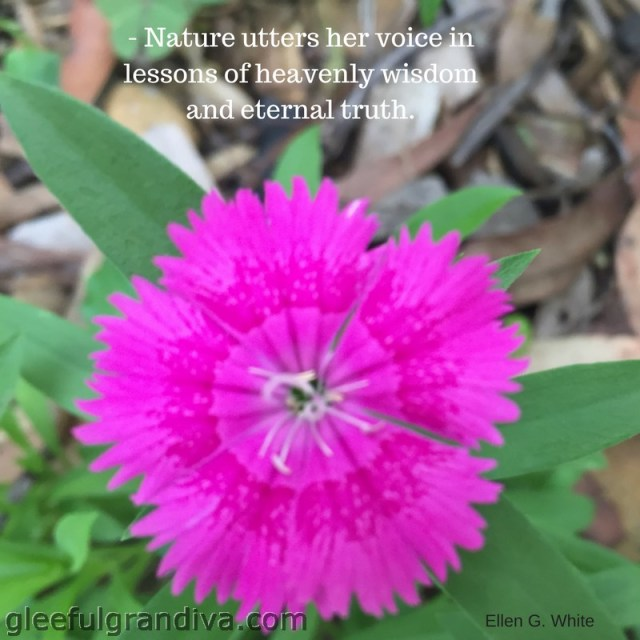 lessons from Mother Nature picture