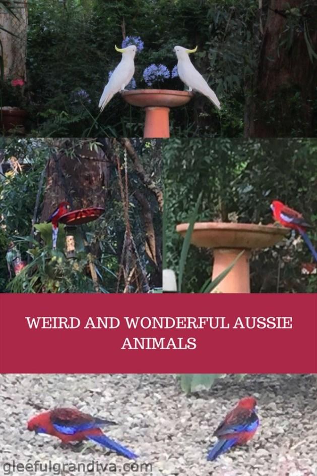 Weird Aussie wildlife picture