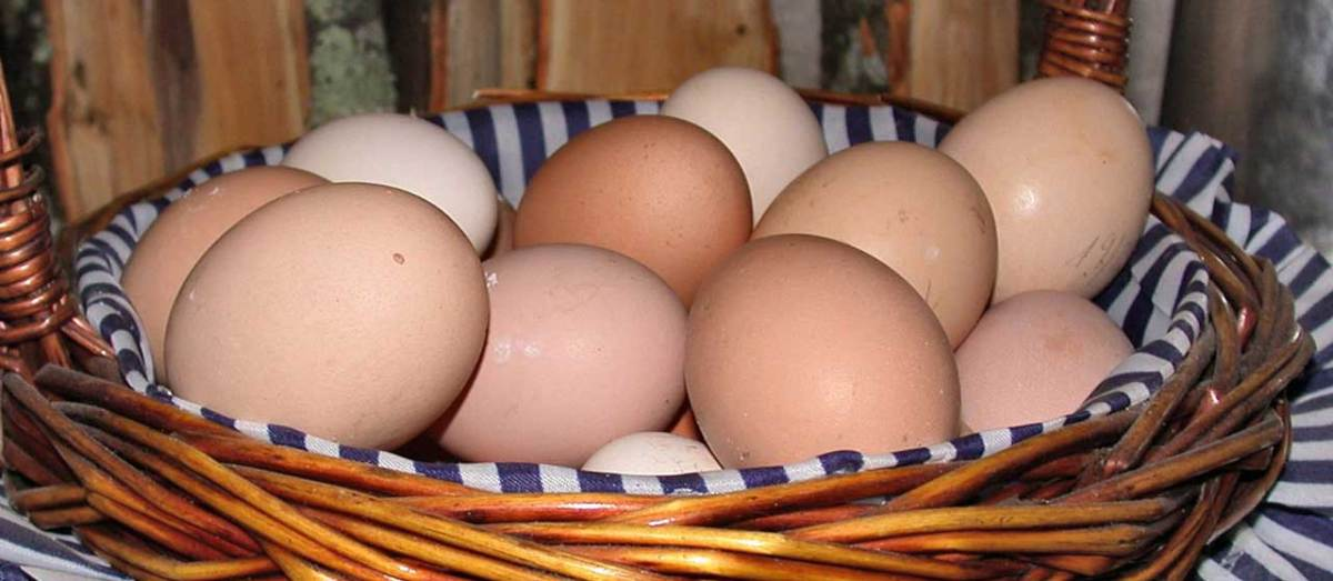 Eggs: Gleneden Ridge Farm produce.