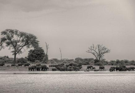 elephant-herd-zambezi-1