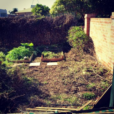 Slowly clearing up the garden.