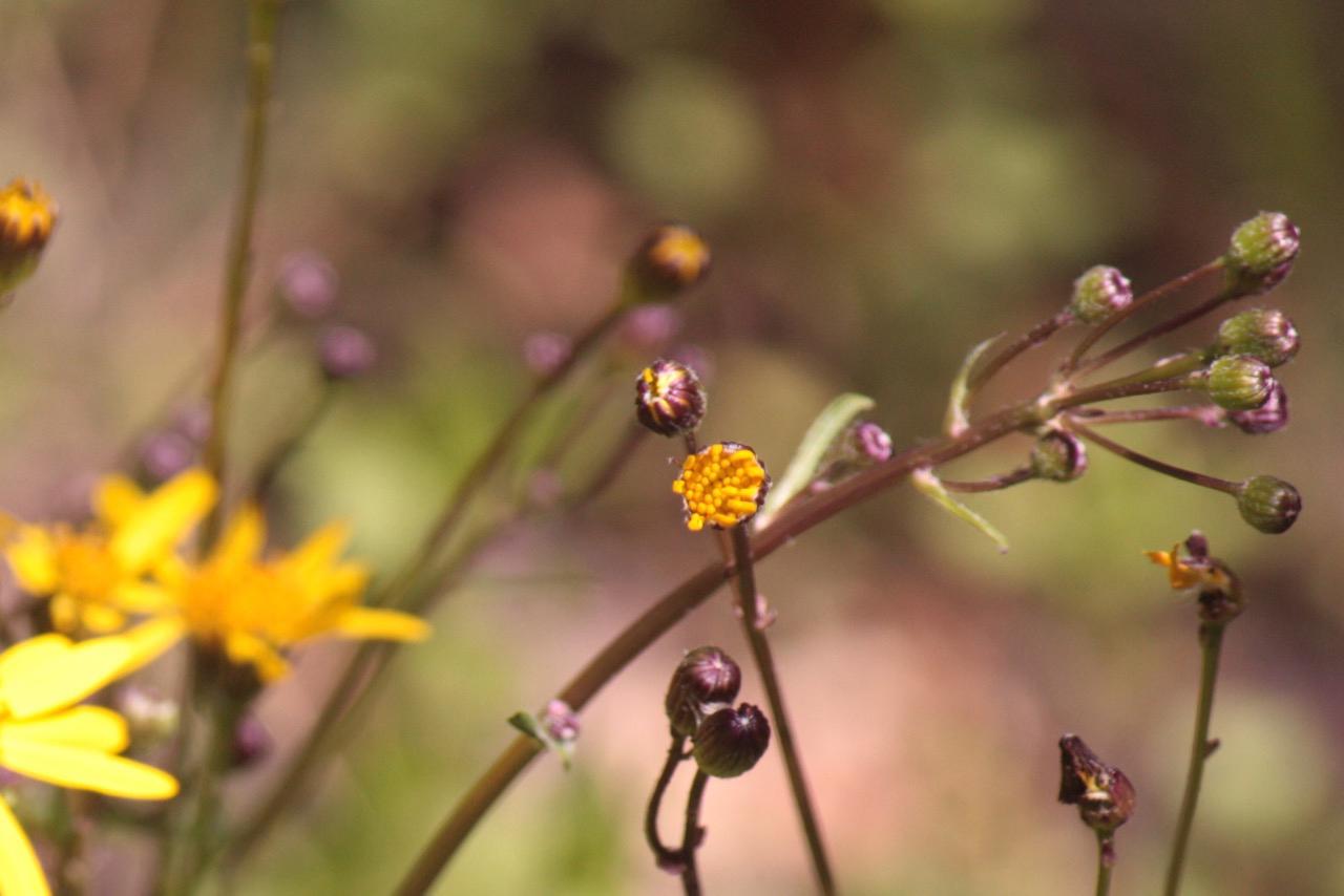 Walking among Wildflowers