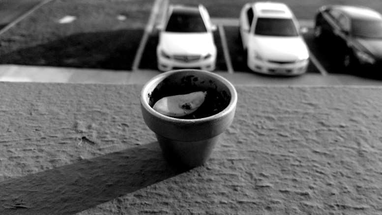a tiny terracotta pot on the ledge of an apartment balcony in Newport Beach, CA