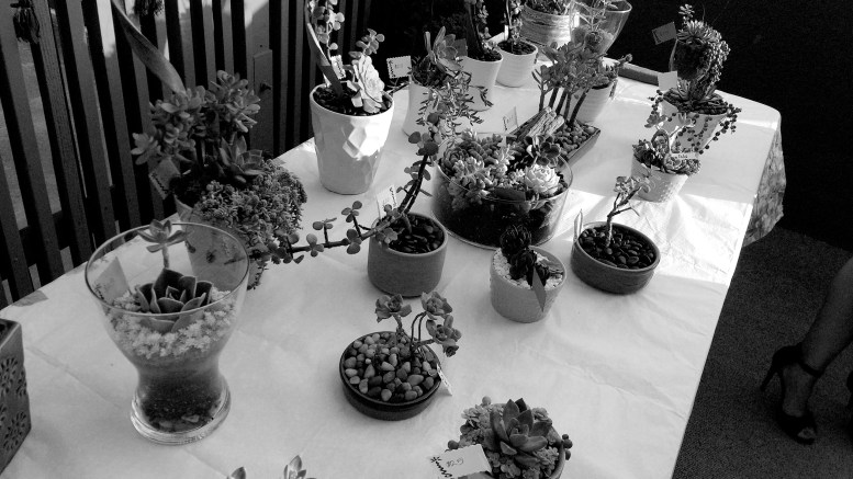 succulents in a variety of arrangements
