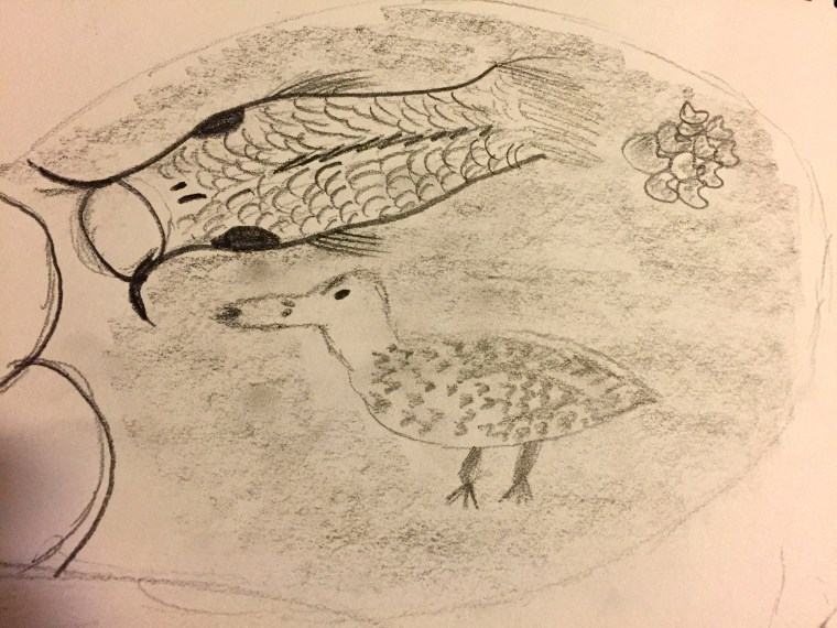 drawing of a duck and a koi fish in the pond at the California State University, Long Beach, Japanese Garden