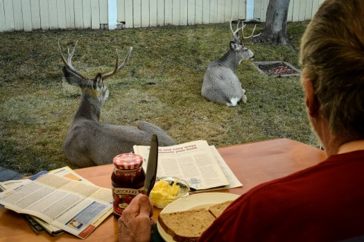 Breakfast With The Deer