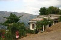 timor-2006-743