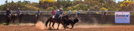 20170225_glenn-power_coorong_district_council_campdrafting_s-p-7577