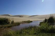 On peut y louer des planches pour glisser sur les dunes.