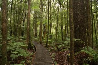 Forêt autour du camping de Trounson Kauri Park...
