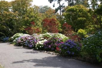 le jardin botanique, un de mes endroits favoris