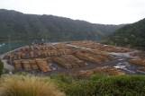 Stock de bois près de Picton
