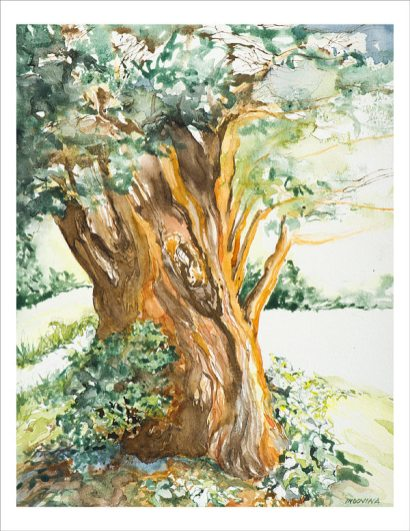 Ancient Yew by Lori Indovina-Valus