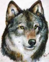 Wolf 2 by Karen Porzak
