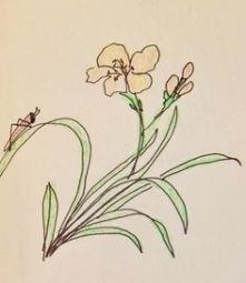 Kay Thomas, GARDEN VISITOR ink and crayon