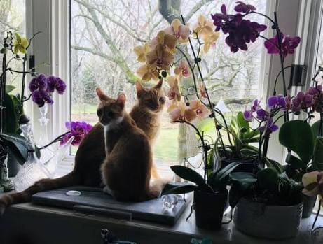 Sandra Noble, Growing kittens among the orchids.