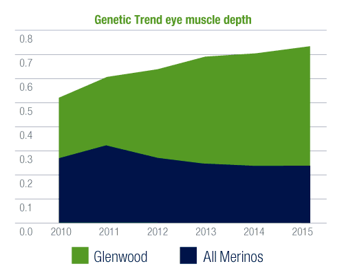 Glenwood Merinos eye muscle depth graph
