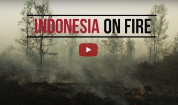 CIFOR scientists on the fire and haze crisis in Indonesia